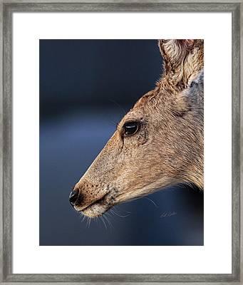 Muley Headshot Framed Print