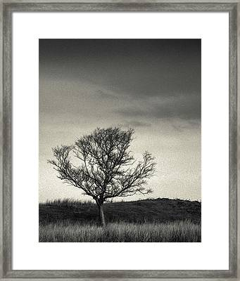 Mull Tree Framed Print by Dave Bowman