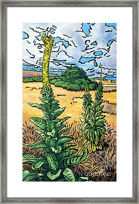 Mullein Framed Print by Fay Biegun - Printscapes