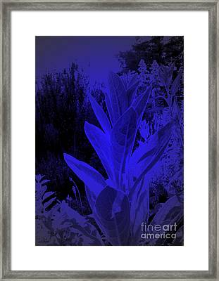 Mullein In The Moonlight Framed Print