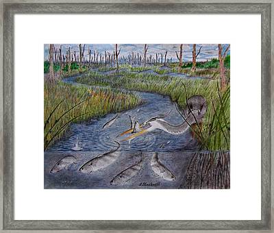 Mullet Creek Framed Print by Jason Blackwell