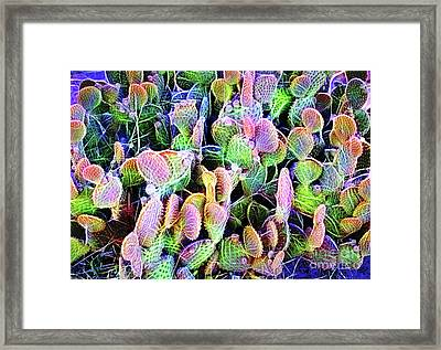Framed Print featuring the digital art Multi-color Artistic Beaver Tail Cactus by Linda Phelps