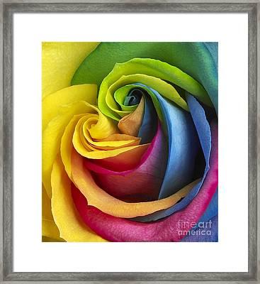 Rainbow Rose Framed Print by Tony Cordoza