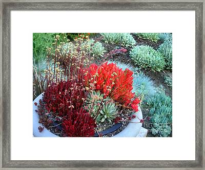 Multi Color Succulents And Other Plants Framed Print by Sofia Metal Queen