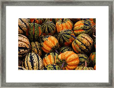 Multi Colored Acorns Framed Print by Jame Hayes