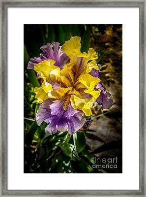Multi Colored Iris Framed Print