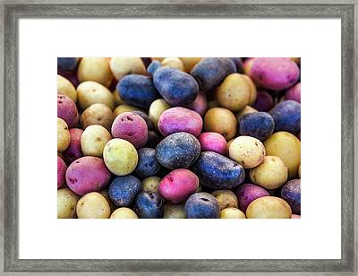 Multi-colored Potatoes Framed Print by Todd Klassy