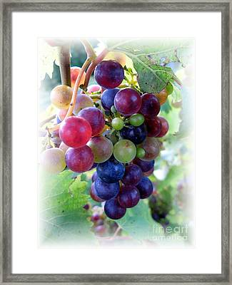 Multicolor Grapes Framed Print by Carol Sweetwood