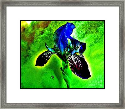 Framed Print featuring the photograph Multicolor Iris by Marsha Heiken