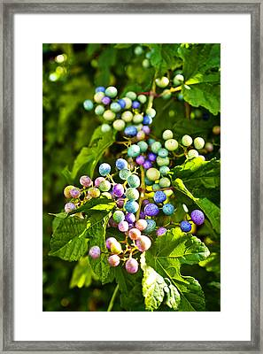 Multicolored Berry Vine Framed Print