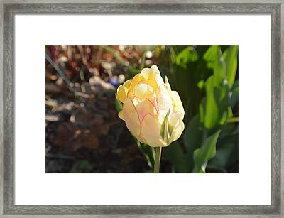 Multiple Petals Framed Print by Tina M Wenger