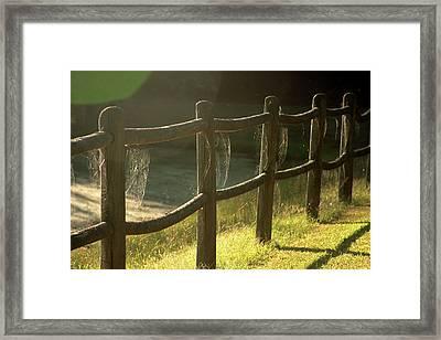 Multiple Spiderwebs On Wooden Fence Framed Print