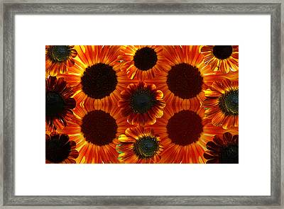 Multiples Of Sunflowers Framed Print by Tina M Wenger