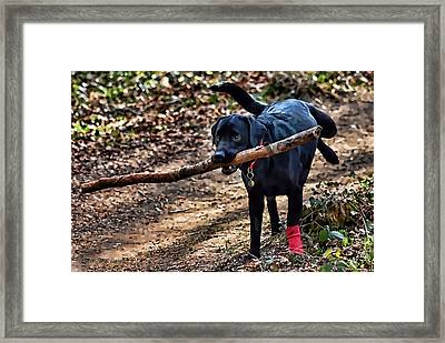 Framed Print featuring the photograph Multitasking by Kathy Tarochione
