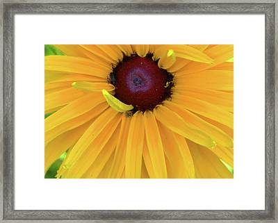 Framed Print featuring the photograph Mum Face by Larry Bishop