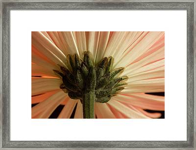 Mum From Below Framed Print