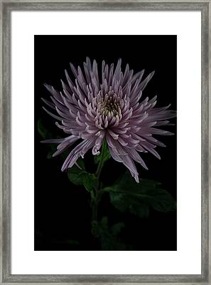 Framed Print featuring the photograph Mum, No.3 by Eric Christopher Jackson