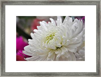 Mum To The Left Framed Print by Teresa Blanton