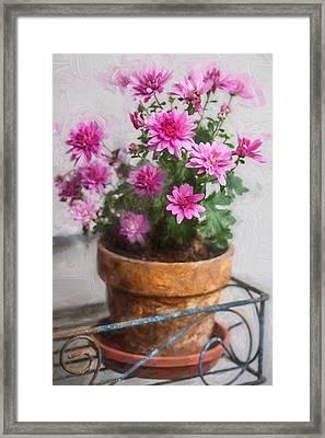 Mums Chrysanthemum Painted 6 Framed Print by Rich Franco