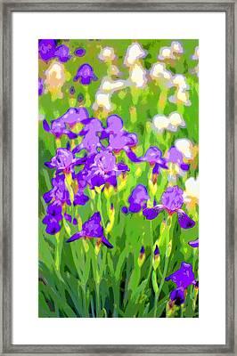 Mums Iris Garden Image Framed Print by Paul Price