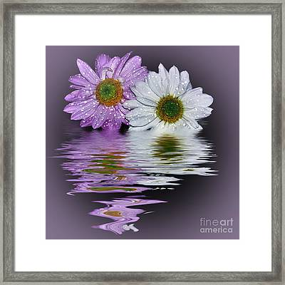 Mums Reflecting In Lilac By Kaye Menner Framed Print by Kaye Menner