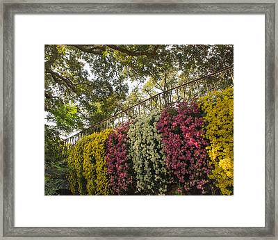 Framed Print featuring the photograph Mum's The Word by Julie Andel