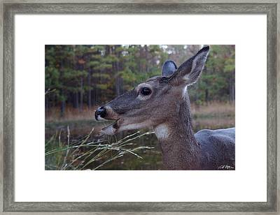 Munch Tine Framed Print by Bill Stephens