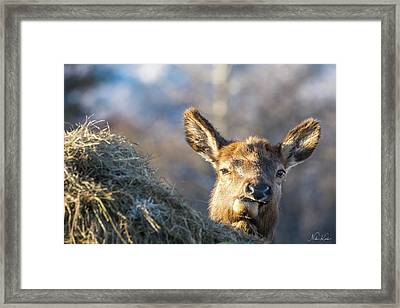 Munching Framed Print