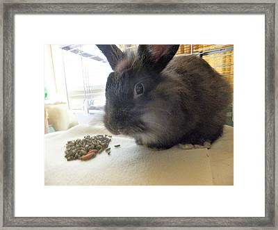 Framed Print featuring the photograph Munchkin by Denise Fulmer