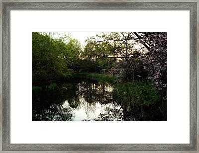 Murky Water Framed Print by Ariane Moshayedi