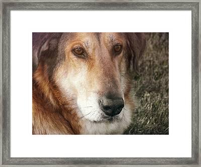 Murphy Framed Print by JAMART Photography