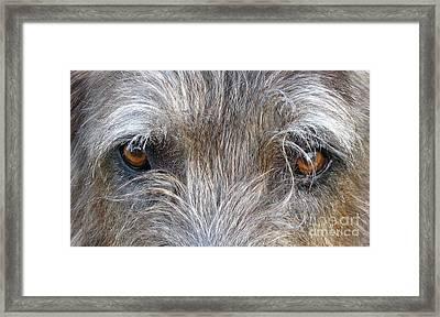 Murphys Gaze Framed Print by Deborah Johnson
