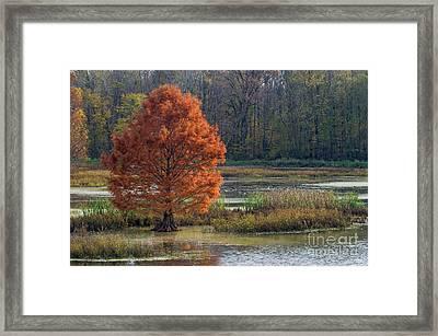 Framed Print featuring the photograph Muscatatuck - D009967 by Daniel Dempster