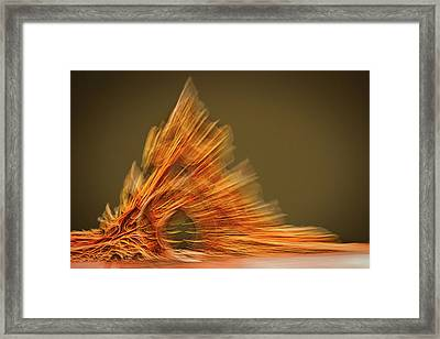 Museum Exhibit Abstract #3 Framed Print