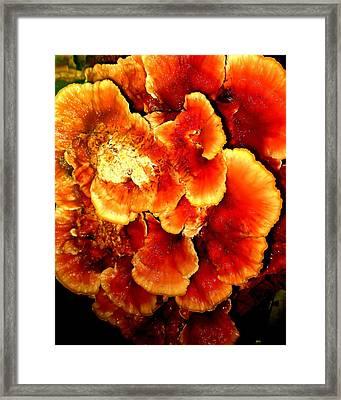 Mushroom Framed Print by Aron Chervin