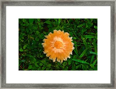 Mushroom And Green Framed Print