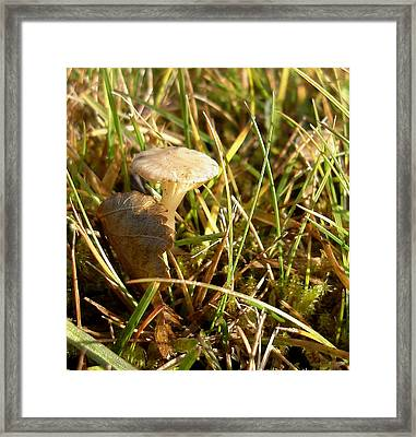 Mushroom And Leaf Framed Print