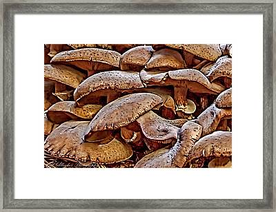 Mushroom Colony Framed Print by Bill Gallagher