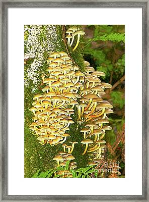 Framed Print featuring the photograph Mushroom Colony Photo Art by Sharon Talson