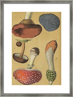 Mushroom Fly Agaric Truffle Framed Print by German Botanical Artist
