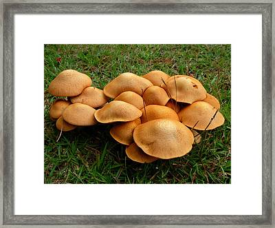 Framed Print featuring the photograph Mushroom Gathering by Jeanne Kay Juhos