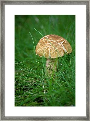 Mushroom In The Grass Framed Print by Teresa Mucha