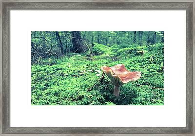 Mushroom In The Green Wood Framed Print