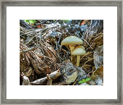 Mushroom In Woody Area Framed Print by Tommy Simpson