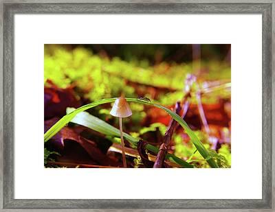 Mushroom Framed Print by Jeff Swan