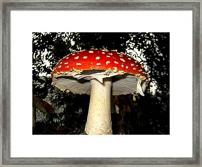 Framed Print featuring the photograph Mushroom by John King