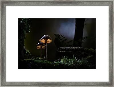 Mushroom Light Framed Print by Dirk Ercken
