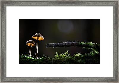 Mushroom Lights Framed Print by Dirk Ercken