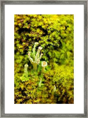 Mushroom Macro Framed Print by Jeff Swan