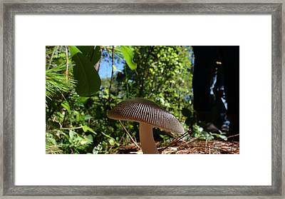 Framed Print featuring the photograph Mushroom by Matthew Bamberg